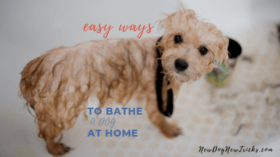 How to Bathe a Dog at Home (1)