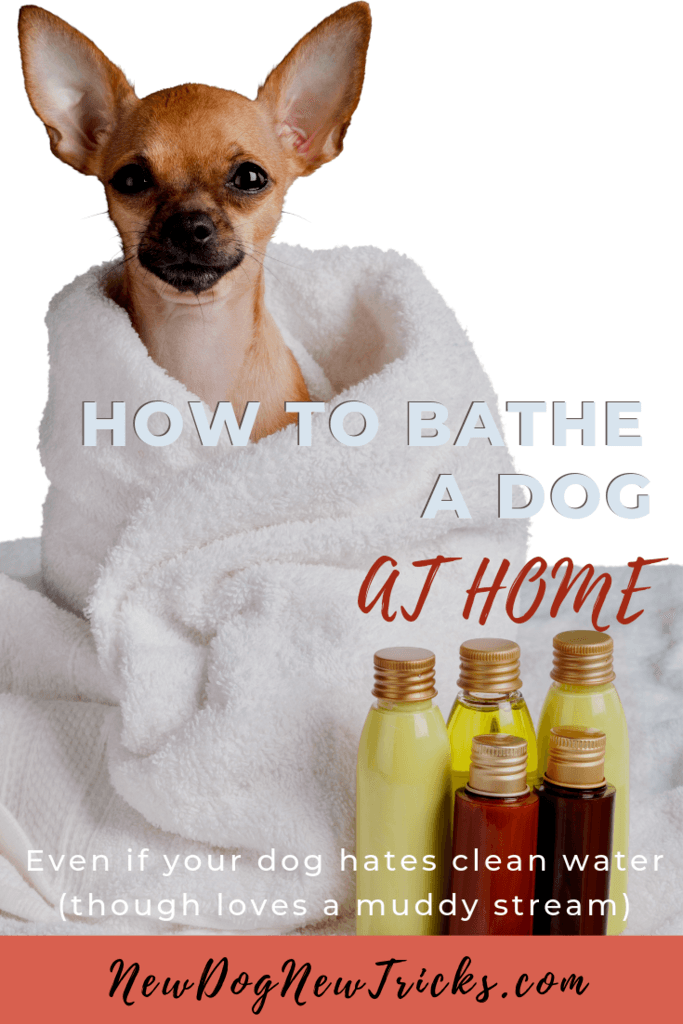 How to Bathe a Dog at Home