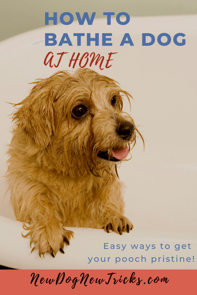 How to Bathe a Dog at Home P2