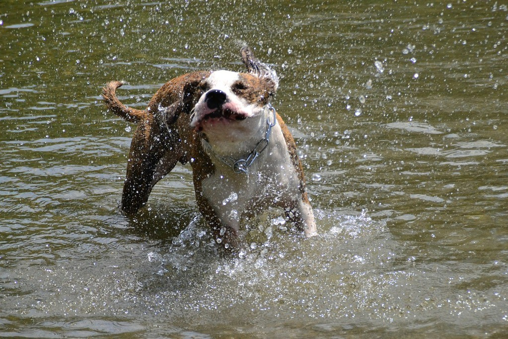 How to Bathe a Dog at Home - Head to Tail