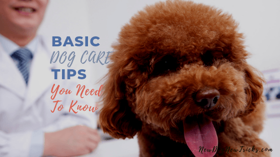 Basic Dog Care Tips You Need To Know (1)