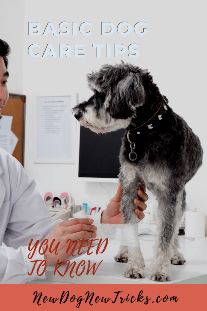 Basic Dog Care Tips You Need To Know P1
