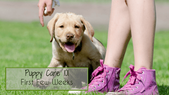 Puppy Care 101 - First Few Weeks