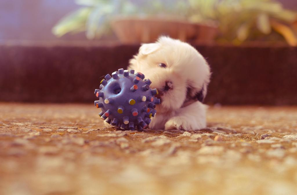 Puppy Care 101 Keep your puppy safe and not chewing things