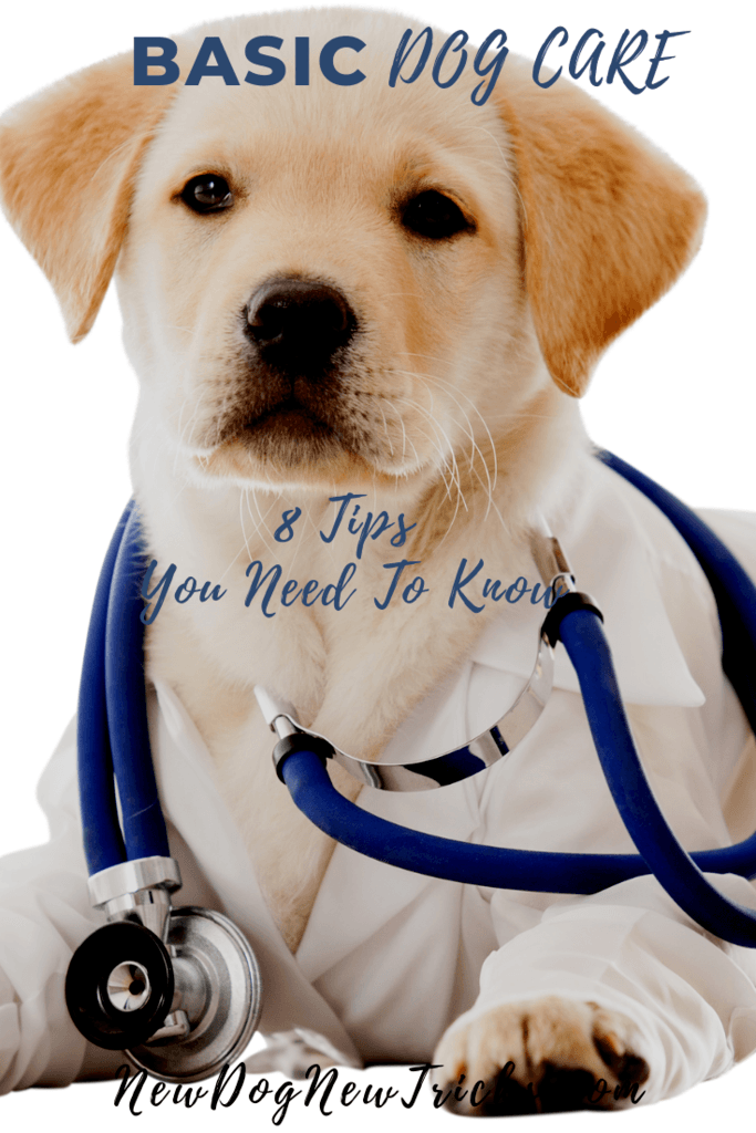 Basic Dog Care Tips You Need To Know P3