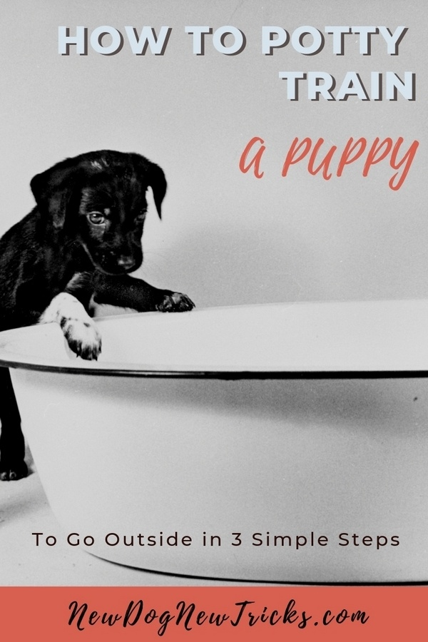 How to Potty Train a Puppy to Go Outside P1