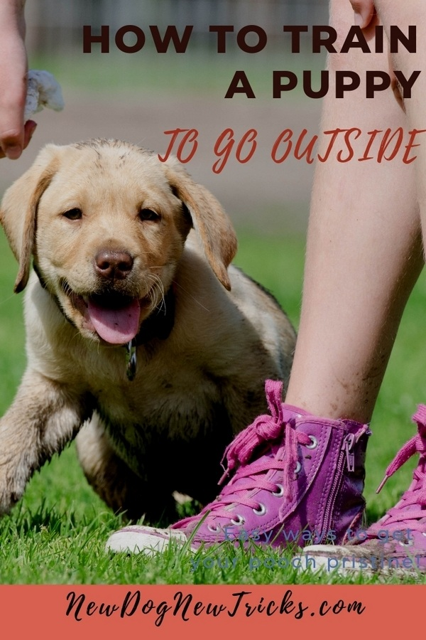 How to Potty Train a Puppy to Go Outside P2