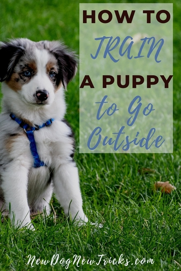 How to Potty Train a Puppy to Go Outside P3