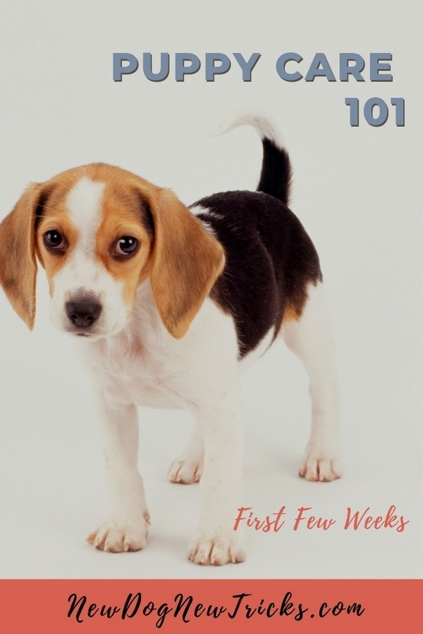 Puppy Care 101 - First Few Weeks P1