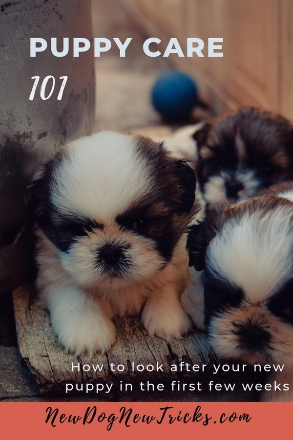 Puppy Care 101 - First Few Weeks P2